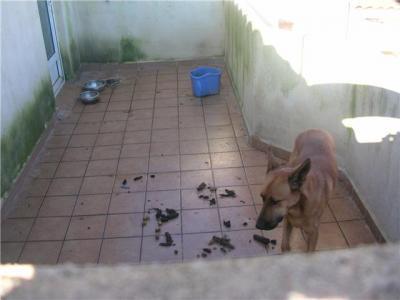 Perro en malas condiciones en Rafelguaraf