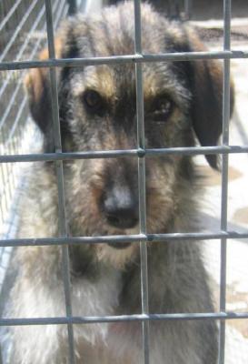 Ayuda para Mamita y sus cachorros (Perrera los Barrios)