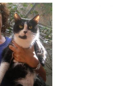 Puchita, una gatita muy especial