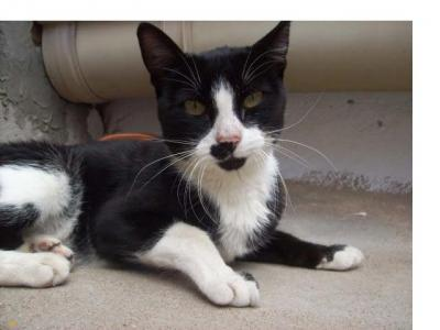 Un caso espeluznante - Gato en Cuenca - URGENTÍSIMO