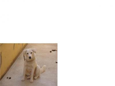 Gutem, perro robado en Algeciras