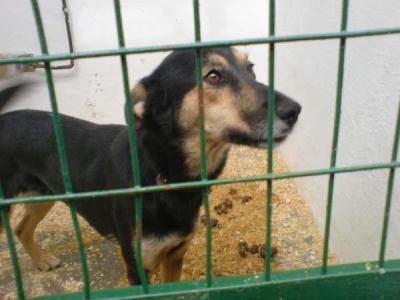 Desde Hellín, la perrera - SOS SOS urgente