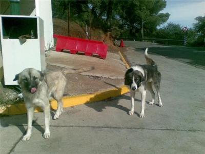 Preciosos perros en los huesos