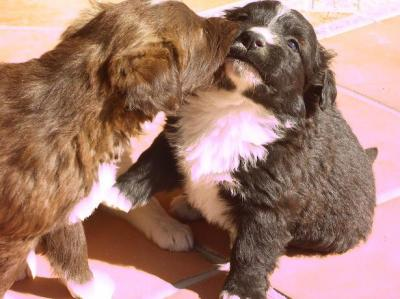 Dos preciosos cachorritos: Lucero y Chocolate