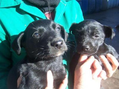 Cachorritos se hielan, ayuda para ellos - Guardo (Palencia)