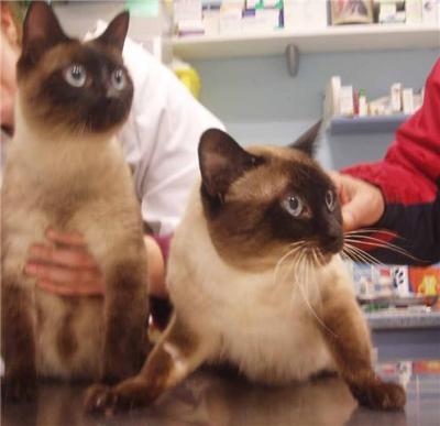 2 gatos que quieren abandonar en la calle (uno tiene 13 años)