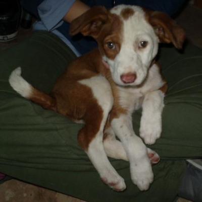 Maya, cachorrita de 2 meses rescatada de una obra
