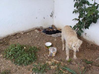 Perrita con sus cachorros abandonada en pueblo de Cuenca