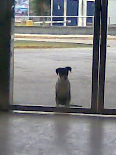 Perrito abandonado en el hospital