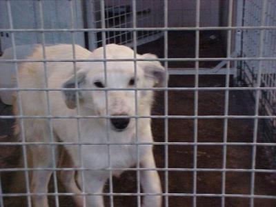 Turrón, cachorrito blanco en busca de hogar - Madrid