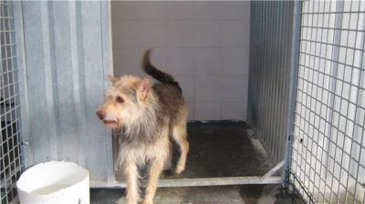 Eda, peludita de tres años en la perrera de Leganés