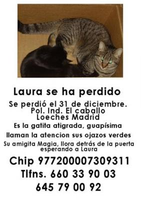 La gata Laura se ha perdido