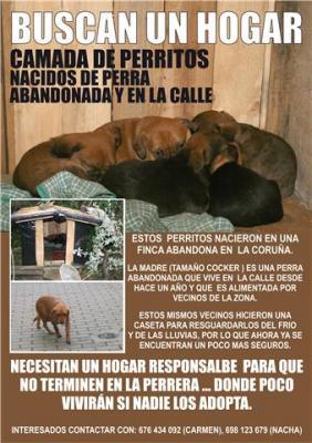 Camada de cachorros para adopción - La Coruña