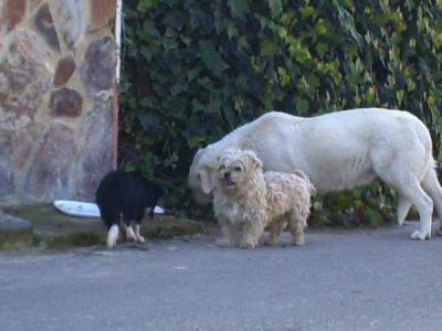 Córdoba - 4 perritos abandonados
