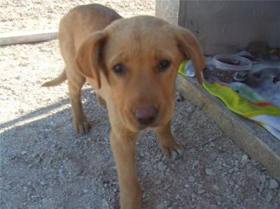 Cachorrita de 3 meses en la calle